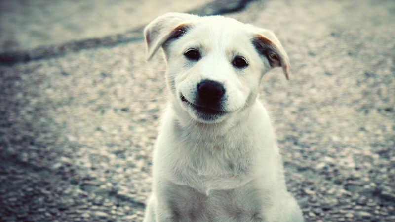 Soñar con perro blanco