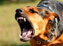 Soñar con perros que te atacan