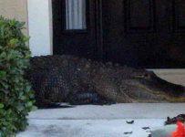 Soñar con cocodrilo en casa