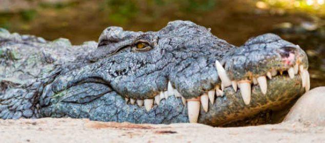 soñar que un cocodrilo se come a alguien