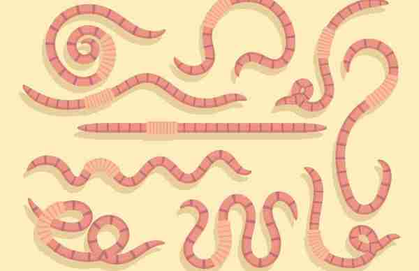 Soñar con gusanos en el cuerpo