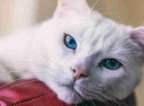 soñar con gato blanco que ataca