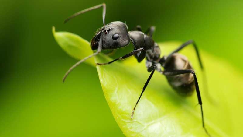 Soñar con hormigas y sus significados