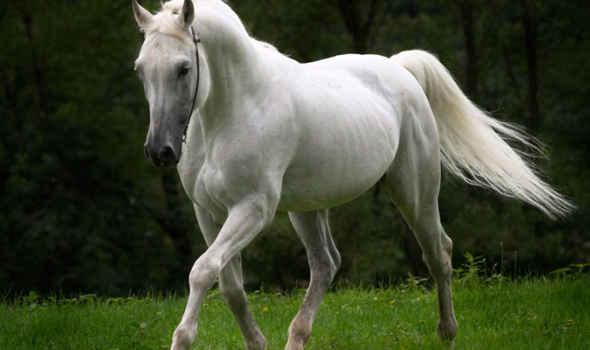 Soñar con caballo blanco