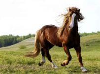 soñar con caballo marrón