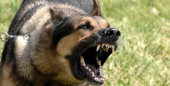 Soñar con perros bravos