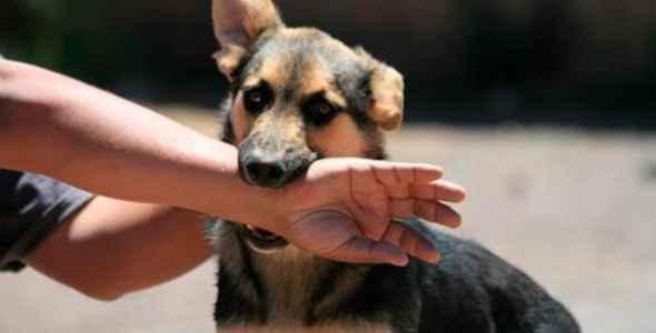 Soñar que perro ataca a una persona