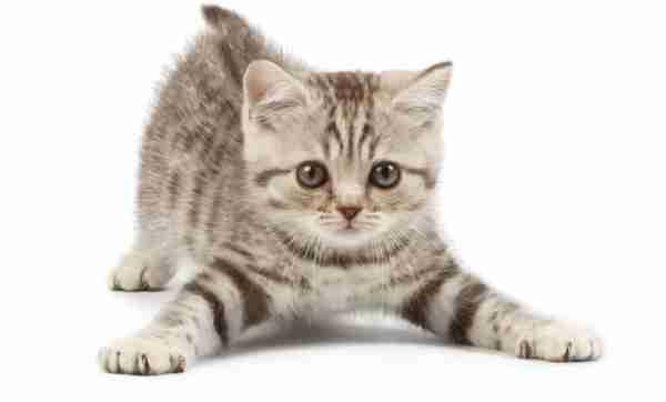 Que significa soñar con gatos bebes
