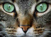Que significa soñar con gatos