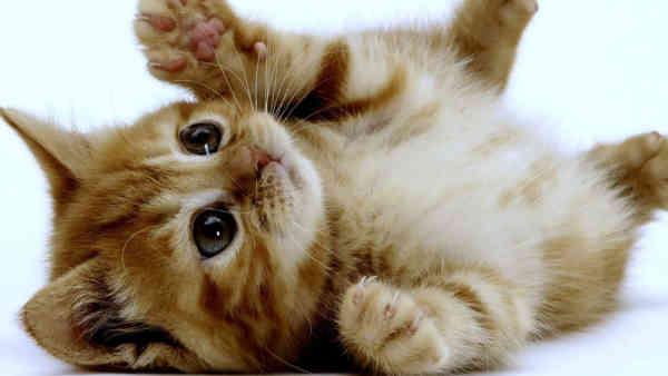 Soñar con gatos bebes