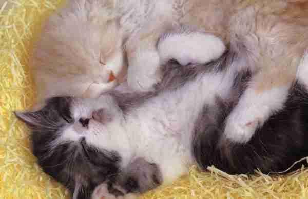 Soñar con gatos muertos