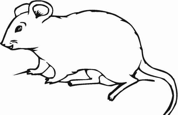 Soñar con ratas blancas