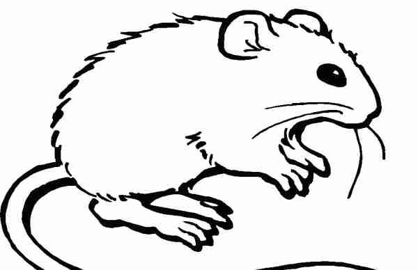 Soñar con ratas que muerden
