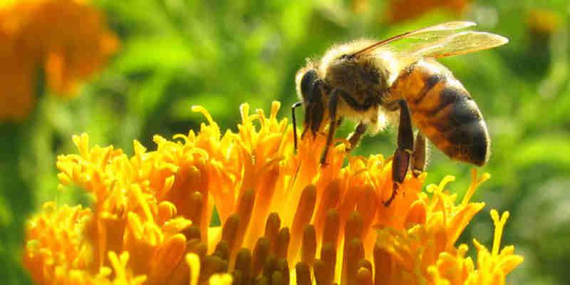 Soñar con abejas en la casa