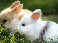 Soñar con conejos muertos