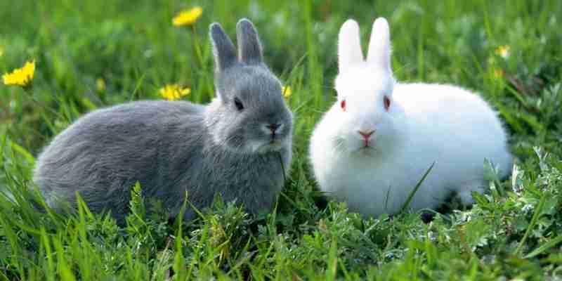 Soñar con conejos que muerden