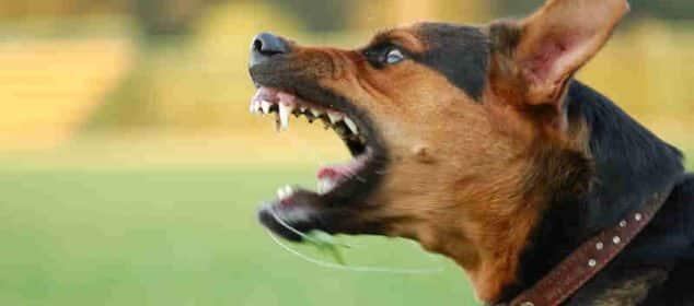 Soñar con perros agresivos