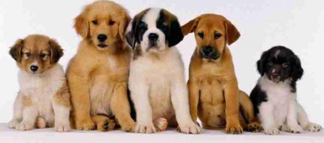 Soñar con perros pequeños