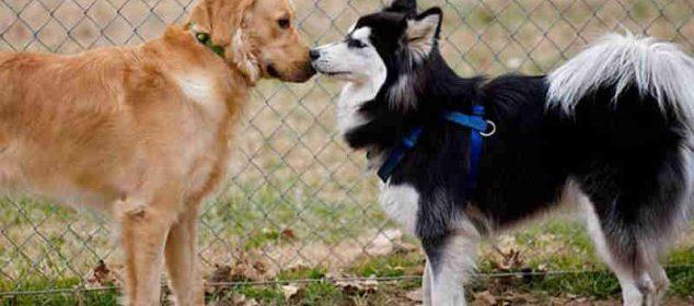 Soñar con perros peleando