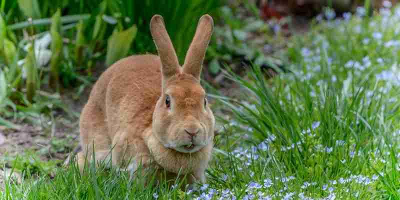 soñar con conejos marrones