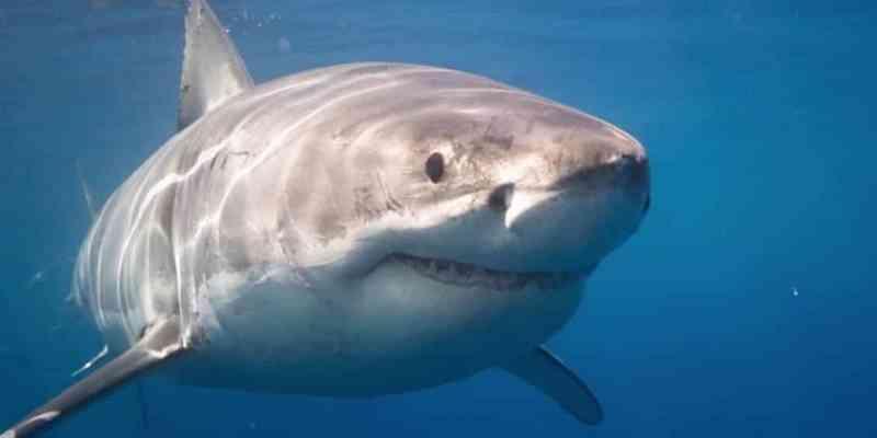 Soñar con pirañas y tiburones