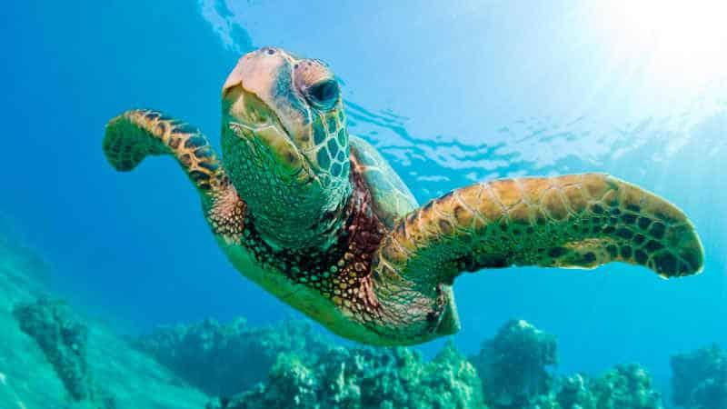 Soñar con tortugas marinas