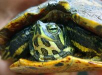 Soñar con tortugas que muerden