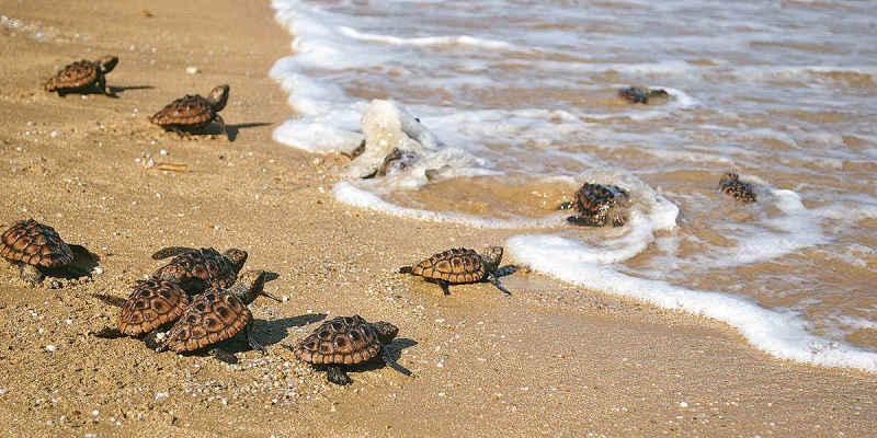 Soñar con tortugas recién nacidas