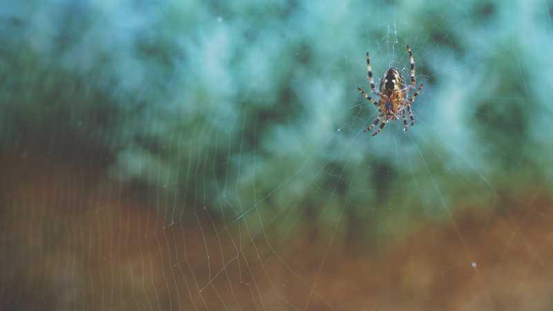 Significado de soñar con arañas y matarlas