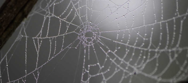 Soñar con arañas y telarañas